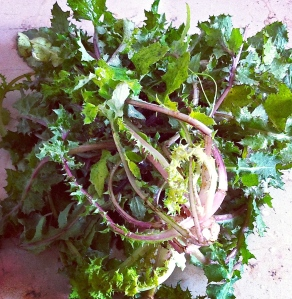 Kale used in the dinner all'Americana with Italian friends.