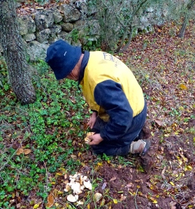 Foraging for wild mushrooms on our property with Domenico.