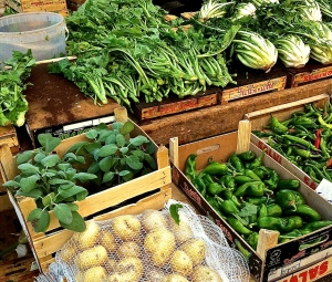 Cima di rape, cicoria and sweet green peppers dominate the winter vegetable scene here.