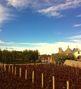 Late winter vineyard in Locorotondo in the Valle d'Itria.