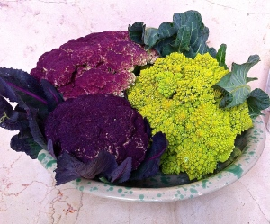 Beautiful Pugliese cauliflower along with bright green romanesco broccoli.