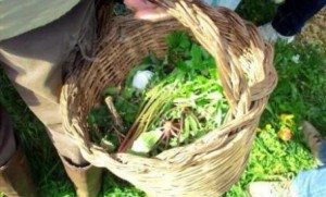 Wild greens hunted with a basket made from fruit tree saplings.