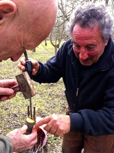 Brian is learning to graft cherry trees with Pinuccio.