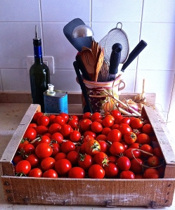 A gift flat of tomatoes from Pino Calabrese's garden.