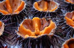 Sea urchins are a seasonal delicacy on both sides of the Pugliese heel.
