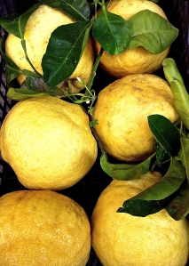 These lemons came all the way from the Amalfi Coast, hauled back to Puglia after a brief trip there.