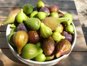 The many colors and forms found in the world of figs (Photo credit: http://neigiardinidipomona-bari.blogautore.repubblica.it/page/2/).