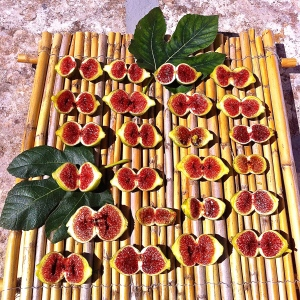 Our figs are drying on our roof terrace. Lots more where these came from.