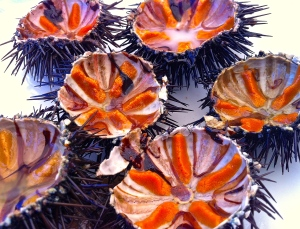 We could have eaten plates and plates of these ricci di mare (sea urchins) at La Forcatella.