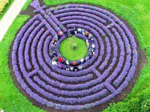 Paolo Belloni has planted a lavender labyrinth with a persimmon tree from Nagasaki, Japan. Incredibly enough, this variety survived the World War II atomic bomb that devastated the city.
