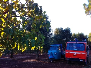 This ape and the red truck were just some of the fleet employed at this year's grape harvest.