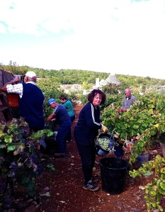 Just some of our intrepid group among the vines during the vendemmia.
