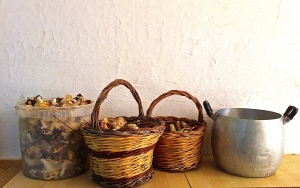 Traditional woven baskets—and the odd pot or two—make for perfect mushroom hunting receptacles.