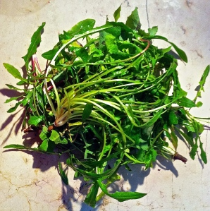 Wild chicory is great in this soup. Substitute dandelion greens from your garden; they're full of amazing health benefits and easy to find.
