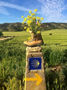 The scallop shell, long a symbol associated with St. James, appears everywhere on the Camino. The shell's lines radiating outward represent the various pilgrimage routes throughout Europe that converge on Santiago de Compostela.