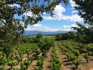 Bierzo is a region known for its mencia, a beautiful grape that makes light fragrant and increasingly complex reds.