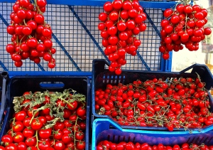 Hanging piennolo tomatoes have extraordinary flavor and great staying power.
