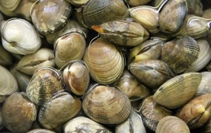 Leave the clams in cold water for a few hours so they can purge themselves of sand.