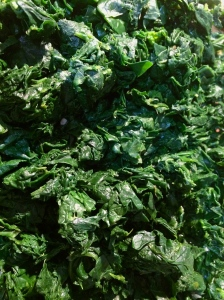 Washed, deveined, blanched, drained and chopped spinach ready to add to spinach and gorgonzola pasta.
