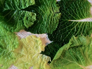 After blanching the cabbage leaves quickly in boiling water, drain them and remove the hard center rib of each leaf. Place the leaves on a kitchen towel to dry.