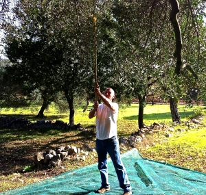Our nuovastoria turned out to involve olives—so many olives and oceans and oceans of organic extra virgin olive oil.