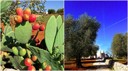 comp-pilano-and-olive-tree